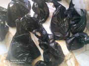 بتبرع من فاعل خير.. توزيع كمية من اللحوم على ايتام مبرة التضامن في قضاء الإصلاح
